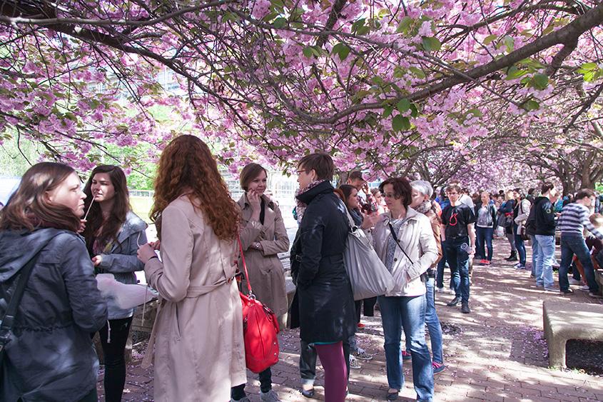 Праздник цветения сакур ВШХТ, Ханами / Chemici slaví vzkvět sakur, Hanami